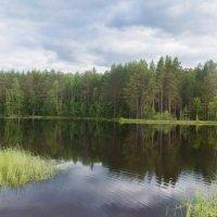 Лесное озеро :: Руслан Веселов