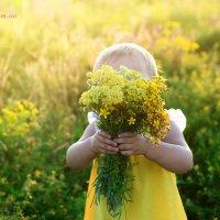 полевые цветы :: Gannochka