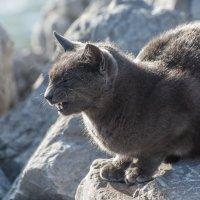 Дикий кот :: MVMarina