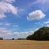 Небо над полем :: Alexander Andronik