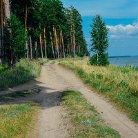Лесные чащи, природа и отдых :: Света Кондрашова