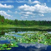 Водный мир мещёрской глухомани... :: Лесо-Вед (Баранов)