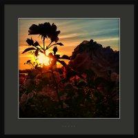 Розы на закате :: Станислав Лебединский