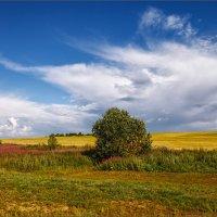 Картинка летняя, деревенская... :: Александр Никитинский