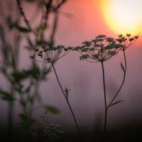 закат в поле :: Эльмира Суворова