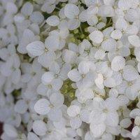 Flower_44 :: Trage