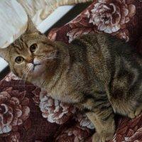 просто кот :: Alexandr Staroverov