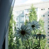 Ромашки на окне :: nika555nika Ирина