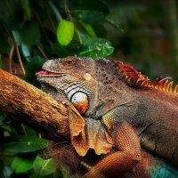 color nature :: Александр Липецкий