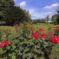 Розы в парке :: Alexander Andronik