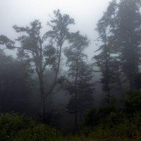 Туман в тайге :: Нина Борисова