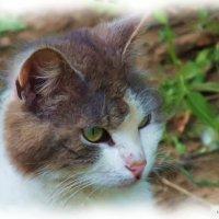 дворовый кот :: Михаил Николаев