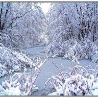 Очарованный лес :: Василий Искалеев