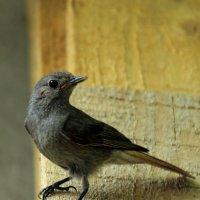Одна маленькая, но гордая птичка :: Константин Строев