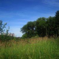 Летом в парке :: Елена Семигина