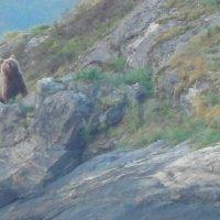 медведь на острове :: Вирма Северная