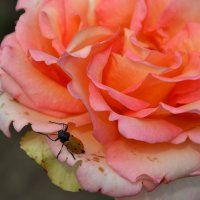 Летом в ботаническом саду... :: Raisa Ivanova