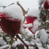 Первый снег :: Виталий Комаров