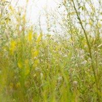 Выйду в поле лягу в травку...... :: Ирина Холодная