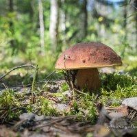 Хозяин леса. :: Андрей Шуйский