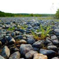 И на камнях растут деревья :: Алексей Вольный