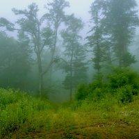 Туманность тайги :: Жанетта Буланкина