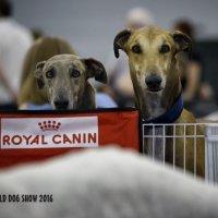 Собаки в клетке наблюдают за активной жизнью выставки. :: OKCAHA Валова