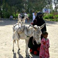 Египет 2007 год. :: Михаил Столяров