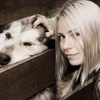 Аляскинский маламут :: Виталий Mavericks Быков