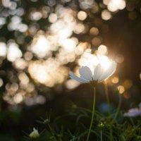 Солнце через край :: Pavel Stolyar