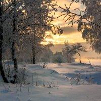 Тепло в мороз :: Владимир Миронов