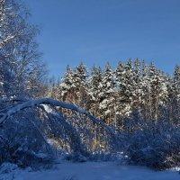 Зимний лес :: Владимир Брагилевский