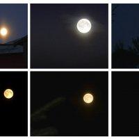 варианты луны :: Наталия П