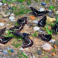 Бабочки :: Юрий
