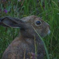 и зайца слепни одолели :: Сергей Цветков