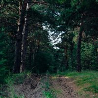 Лесные тропы,везде шишки :: Света Кондрашова