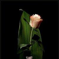 Натюрморт с розой :: Андрей Окороков
