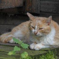 Пока котята где-то бегают.... :: Tatiana Markova