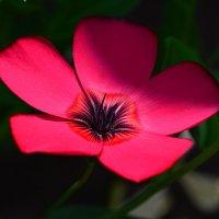 Аленький цветочек :: Татьяна Соловьева