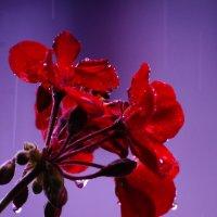 Кто как, видит дождь. :: Алексей Ревук