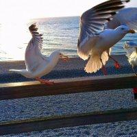 Ветер с моря дул... :: Ilya Goidin