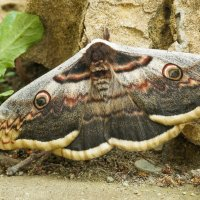 Ночная бабочка :: Павел Руденко