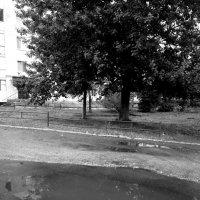 После дождя :: Николай Филоненко