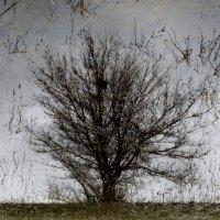 Дерево :: Павел Кореньков