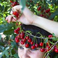 вишневая сказка :: Олеся Ханина