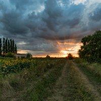 Закат с подсолнухами у старой насосной станции :: Александр Плеханов