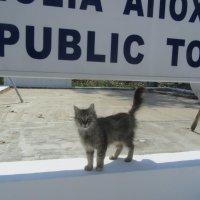свободные кошки Кипра :: tgtyjdrf