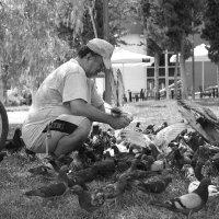 Благодатное дело кормить голубей и других птиц! :: Оля Богданович