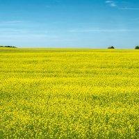 Жёлтый и синий. :: Андрий Майковский