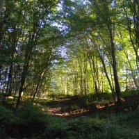 утренний лес в горах :: Олег Романенко
